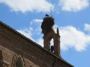 Storks at Work at our Carrion de los Condes