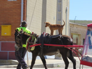 Spanish Perigrinos Traveling with Donkey and Dog